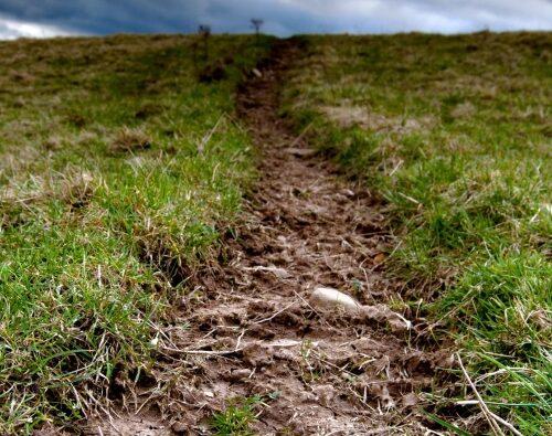 Державну експертизу землевпорядної документації скасовано – підписано Закон